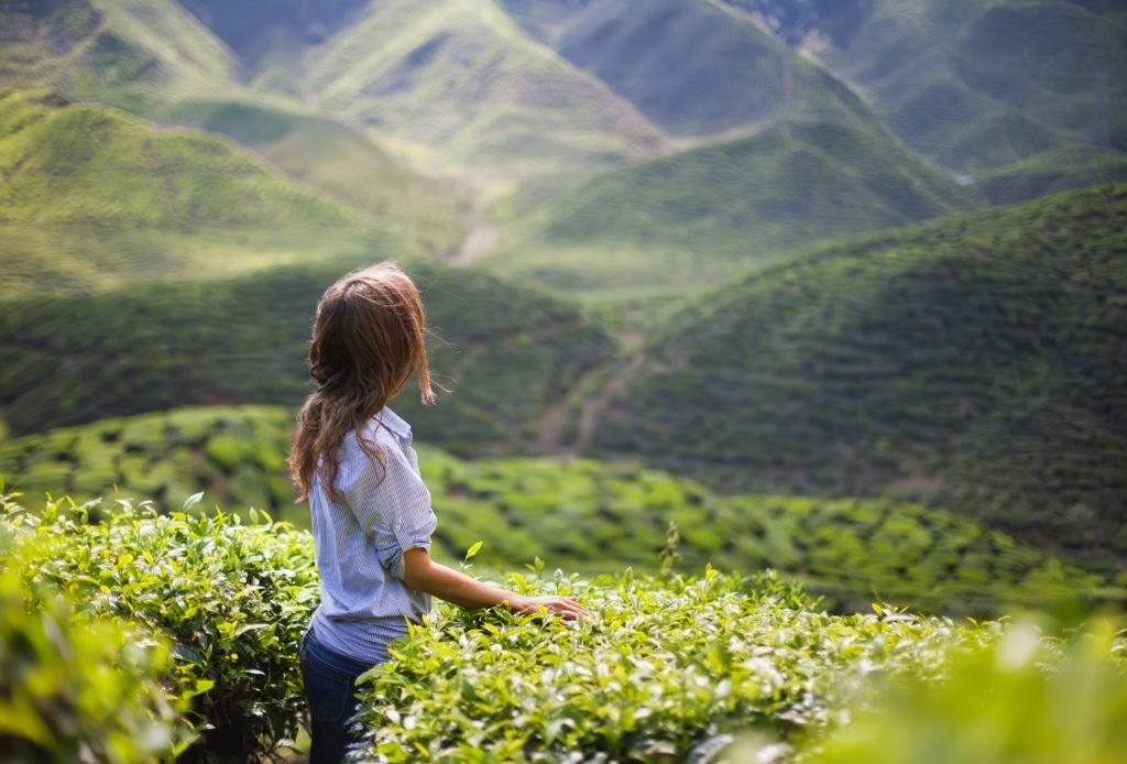 Young Woman on Tea Plantation in Mountain Valley