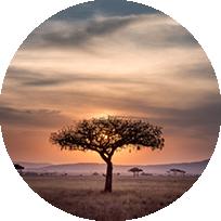 NOTRE CONCEPT_AFRIQUE DU SUD